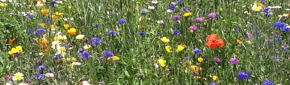 Summer_Flowers2-76d35a00859c4f6a6240f96151c3b044.jpg